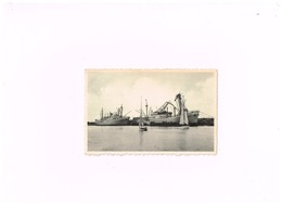 Zeebrugge. M/V Elisabethville Et Mar Del PLata Le Long Du Môle. - Dampfer