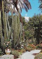 CP - Maroc Pittoresque Marrakech - Jardin Exotique Du Peintre Majorelle éditeur Habous Difikot (écrite + Timbre). - Marrakech