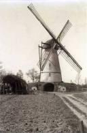 VLIMMEREN Bij Beerse (Antw.) Molen/moulin - Verdwenen Molen De Peperbus, Zeer Fraaie Opname Van Glasnegatief - Beerse