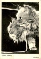 CAT POSTCARD - Cats