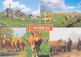 Divers   H176        ( 5 Vues )  L'Aubrac ( Vache, Debaisieux ) - France
