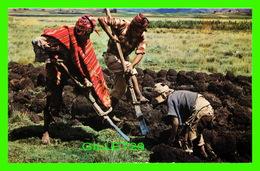 CUZCO, PÉROU - CHAQUITACJLLA, ARADO INCAICO - PEASANTS TILLING THE SOIL AS IN THE INCA TIMES - ANIMATED - 1980 - - Pérou