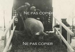 PARIS Porte De Versailles Salon Agriculture Porc 1933 Par Photographe Henri MANUEL - Lugares