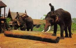 THAI Elephants Pushing The Log With Their Trunks - Thailand