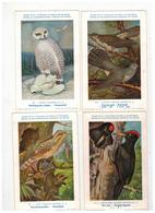 Vogels  Oiseaux Koninklijk Natuurkundig Museum V België : 40 Kaarten Nrs 61 Tem 100 - 5 - 99 Postkaarten