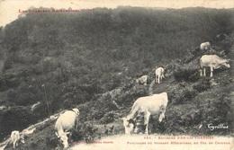 Col Du Chioula - Pâturages Du Versant Méridional (Labouche N°825) - Frankreich