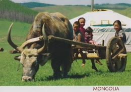MONGOLIE - Attelage  - Buffle  - Boeuf - CPM Couleur - Mongolia
