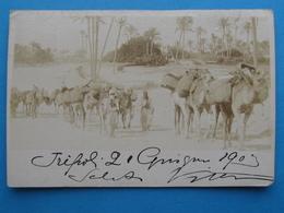CARTE POSTALE SOUVENIR DE TRIPOLI DE BARBARIE, COLONNA CAMMELLI ANIMATA VIAGGIATA 1903 - Libyen