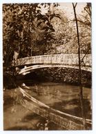 004 Aveiro Parque Da Cidade Infante D. Pedro Antigo Postal Fotografico - Aveiro