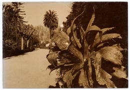 007 Aveiro Parque Da Cidade Infante D. Pedro Antigo Postal Fotografico - Aveiro