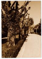 009 Aveiro Parque Da Cidade Infante D. Pedro Antigo Postal Fotografico - Aveiro