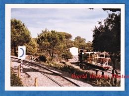 Photo Ancienne Snapshot - LA TOUR DE MARE / Fréjus - Petit Train à Identifier - Aout 1963 - Chemin De Fer Var - Trains