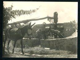 2 Fotografias (Algarve?) POÇO C/ NORA E BURRO. Set 2 Vintage Photos Donkey Around Well W/water Wheel PORTUGAL 24 X 18cm - Photos