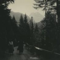 Suisse Route De La Tête Noire Foret Ancienne Photo Stereo Possemiers 1920 - Stereoscopic