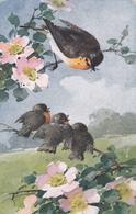 I Pettirossi  -  Edit.  F. Ph. G.  ,  Serie  224  ,  Nr .  4297 - Uccelli