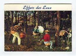 C.P °_ Humour-Effets Des Eaux En Sous-bois-1990 - Humor