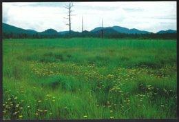 CP Japon, Senjo-ga-Hara Plain. Non Circulé - Autres