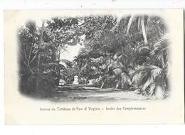 ILE MAURICE Avenue Du Tombeau De Paul Et Virginie Jardin Des Pamplemousses - Mauricio