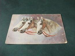 CAVALLO HORSE CABALLO IN PRIMO PIANO 3 TESTE DI CAVALLI BIANCHI DI PROFILO PICCOLO FORMATO PIEGHE SCIUPATA FORO PUNTINA - Pferde