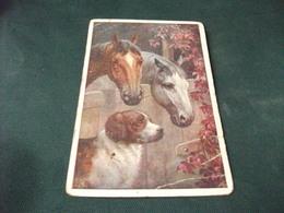 CAVALLO HORSE CABALLO IN PRIMO PIANO 2 TESTE DI CAVALLI  DI PROFILO UN CANE DOG CHIEN HUND PICCOLO FORMATO PIEGHE ANG. - Pferde