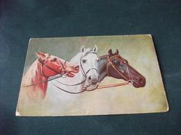 CAVALLO HORSE CABALLO IN PRIMO PIANO 3 TESTE DI CAVALLI  DI PROFILO  PICCOLO FORMATO PIEGHE STRAPPAMENTO. - Pferde