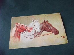 CAVALLO HORSE CABALLO IN PRIMO PIANO 3 TESTE DI CAVALLI  DI PROFILO  PICCOLO FORMATO MACCHIE PIEGHETTA ANG. - Pferde