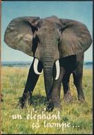 °°° 19056 - SENEGAL - UN ELEPHANT CA TROMPE - 1971 With Stamps °°° - Senegal
