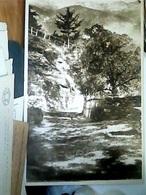 TORINO Novalesa Nel Parco Della Villa Del Convitto Umbeto I   N1930  HL5486 - Education, Schools And Universities