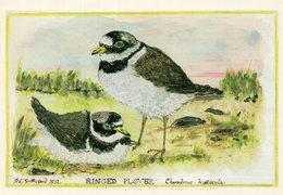 Ringed Plover Norfolk Coast Birds At Sutherland Postcard - Birds