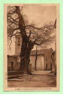 CPA - REVEST-du-BION - L'Eglise Et L'Ormeau Séculaire - - France
