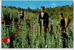 C. P.  PICCOLA    MEO  HILL TRIBE   GIRLS  IN  THE  OPIUM POPPY  FIELD      2 SCAN  (NUOVA) - Tailandia