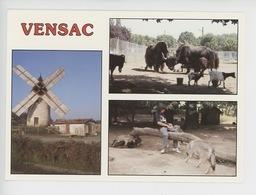 Vensac : Parc Animalier Yacks, Loups (yack Loup) Et Moulin à Vnet (zoo Cp Vierge N°33396) - France