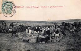 France - 51 - Ambonnay - Près De Louvois, Verzy, Trépail ,Vaudemange ,Bouzy - Cueillette Et épluchages Des Raisins - Other Municipalities