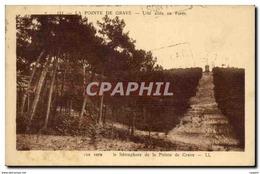 Pointe Du Grave CPA Une Allee En Foret Vue Vers Le Semaphore - France