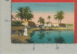 CARTOLINA NV ALGERIA - SCENES ET TYPES - Paysage Du Sud - Oasis De Palmiers Dattiers - 9 X 14 - Algeria