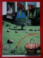 KOV 506-19 - COW, VACHE, RABBIT, LAPIN - Insectes