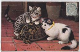 Cpa Fantaisie Chats Et Tortue Chat Oilette Turtle Cat - Gatos