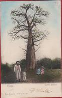 Belgisch Congo Belge Geant Baobab Colorisee Ingekleurd Animee 1908 Missionaire Missionaris Missie Missionary - Belgisch-Congo - Varia