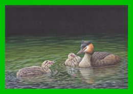 BUZIN - Grèbes Huppés - Carte Double - 1985-.. Birds (Buzin)