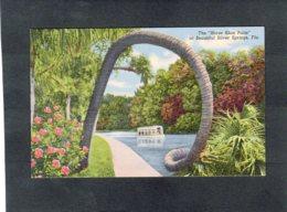 "91815    Stati  Uniti,   The  ""Horse  Shoe Palm"" At  Beautiful Silver  Springs,  Fla.,  NV(scritta) - Silver Springs"