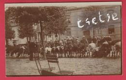 Ciney - Le Marché Aux Bestiaux - Carte Photo , Document Unique  ( Voir Verso ) - Ciney