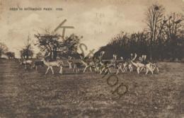 Deer In Richmond Park  [AA48-4.081 - Richmond