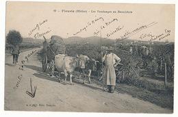 FLEURIE - N° 19 - LES VENDANGES EN BEAUJOLAIS - France