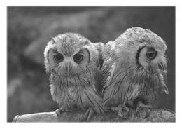 ANDILLY - Hiboux Au Parc Des Epouvantails - Pájaros
