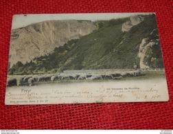FREYR  -  Un Troupeau De Moutons -  1901 - Hastière