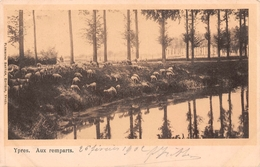 Ypres - Aux Remparts En 1902 (moutons) - Ieper