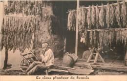 Le Vieux Planteur De La Semois - Tabac à Sécher - Non Classés