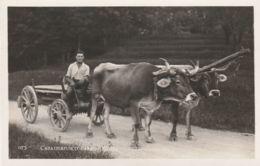 Postcard - Caratteristico Carro Ticinese - Card No.073 Unused Very Good - Cartoline