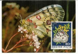 Papillon L'Apollo (Parnassius Apollo) . Belle Carte-Maximum Premier Jour 1974 - Butterflies