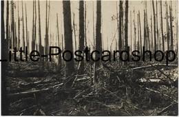 Foto Zerschossener Wald Nach Den Russischen Angriffen Bei Skrobowa August 1916 Russland Weissrussland LIR 72 - War 1914-18